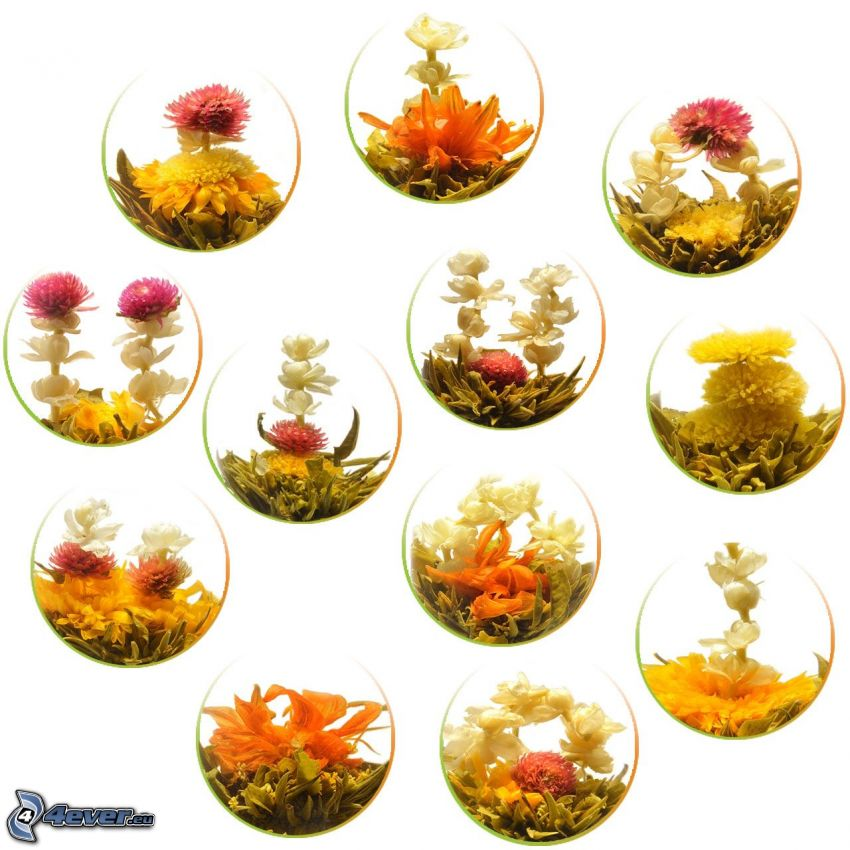 té de la floración