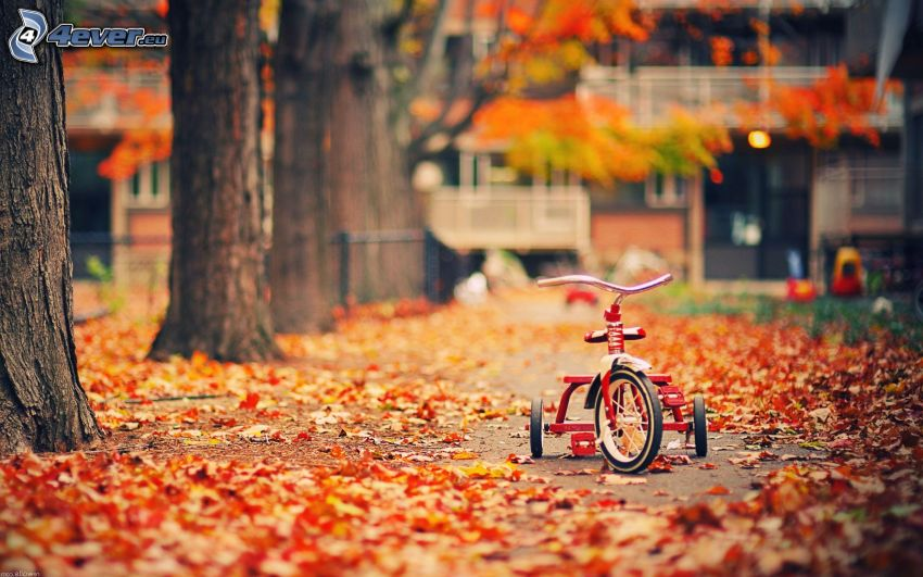 triciclo, arboleda
