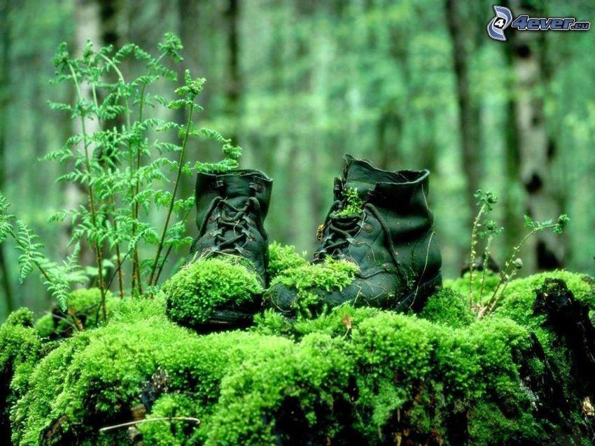 zapatos, musgo, bosque