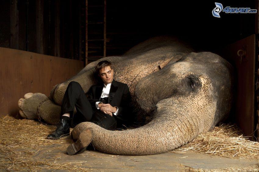 Robert Pattinson, elefante, hombre en traje