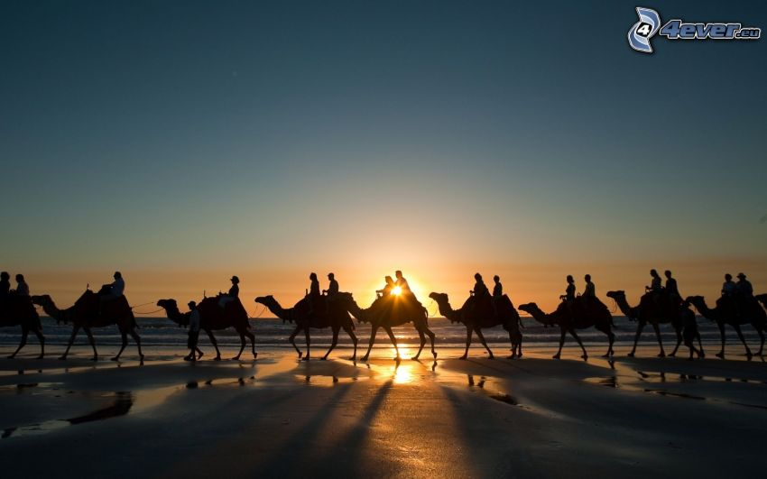 beduinos en camello, puesta de sol en el mar