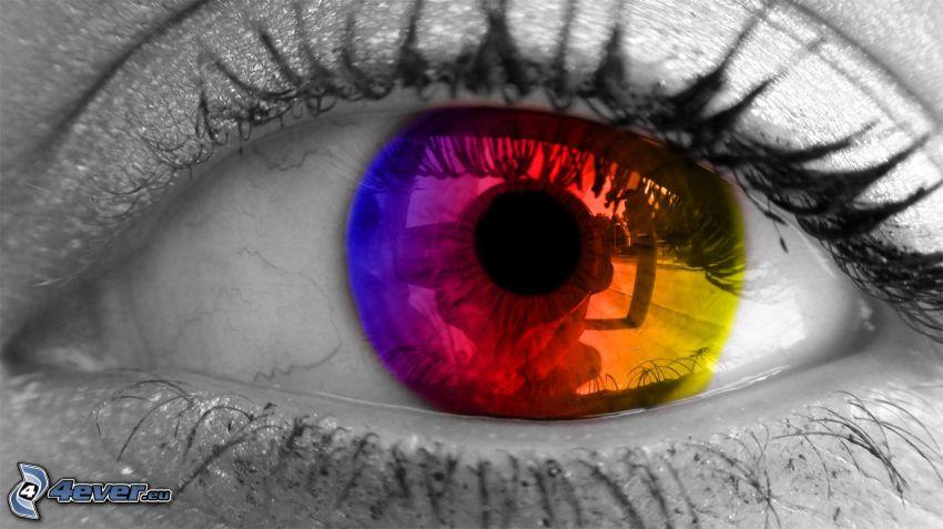 ojo colorido, iris, colores