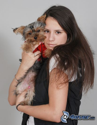 Yorkshire Terrier, chica