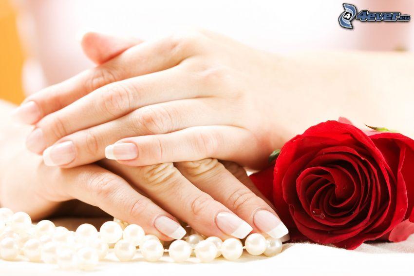 manos, rosa roja, collar de perlas