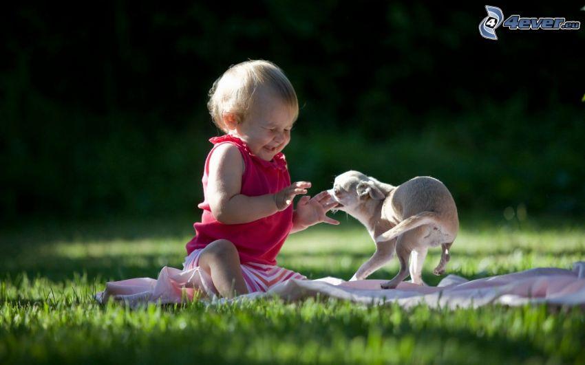 bebé, cachorro, alegría