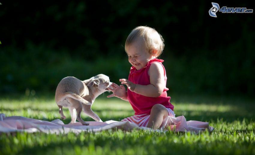 bebé, cachorro, juego