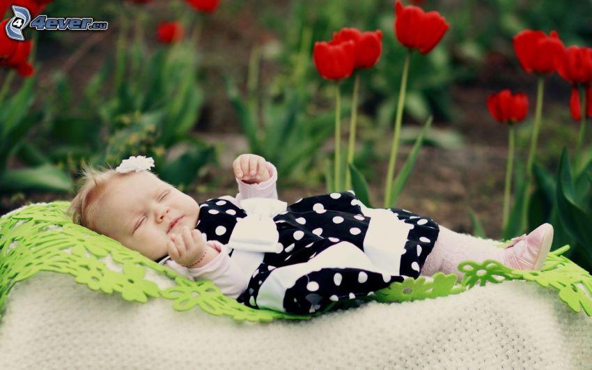 bebé, chica, dormir, tulipanes rojos