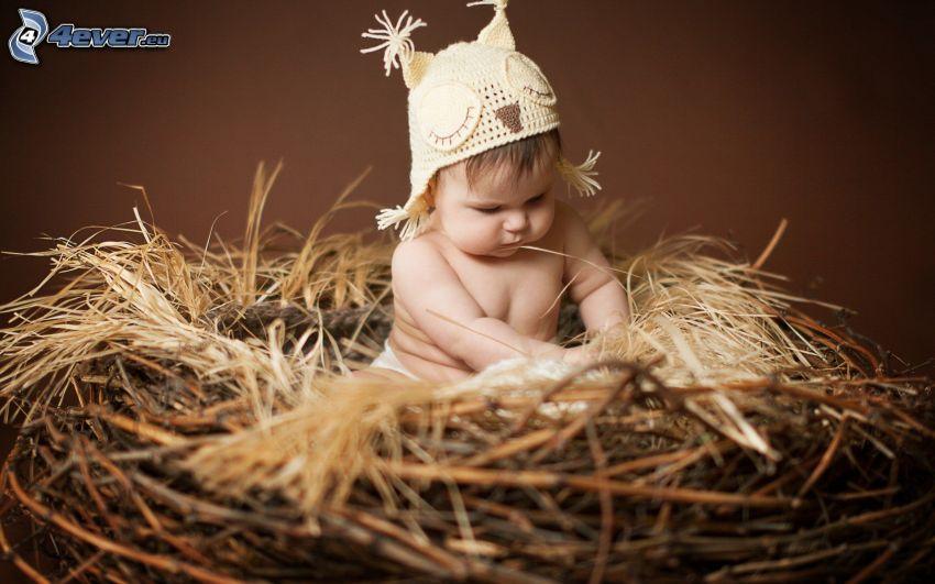 bebé, nido, gorro, pájaro