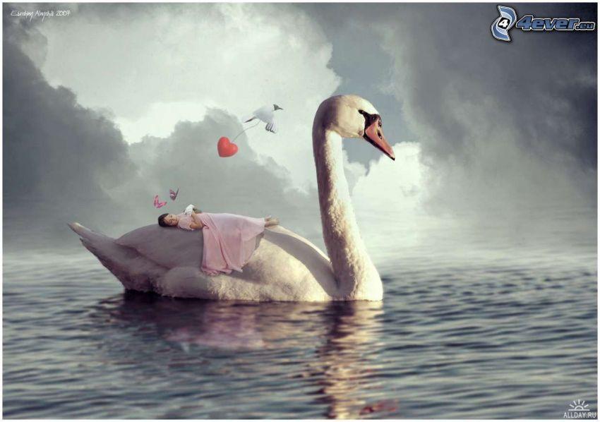 bebé durmiendo, cisne, lago
