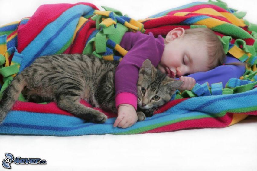 bebé y el gato, manta, dormir