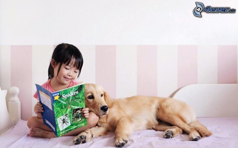 chica, asiática, golden retriever, revista