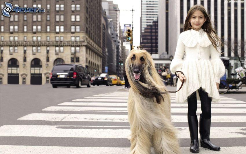 chica, perro, paso peatonal