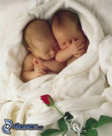 gemelos, bebé, rosa