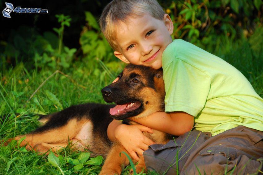 niño, cachorro alsaciano