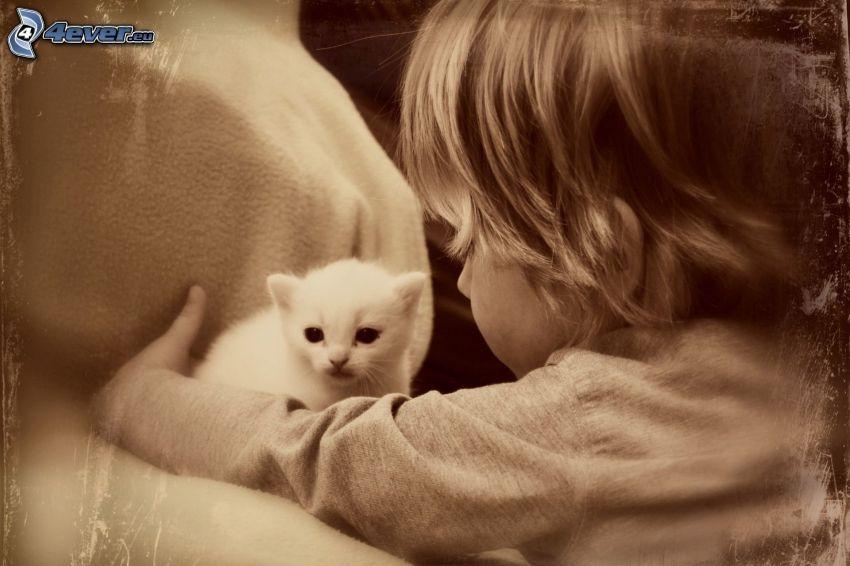 niño, gatito blanco, sepia