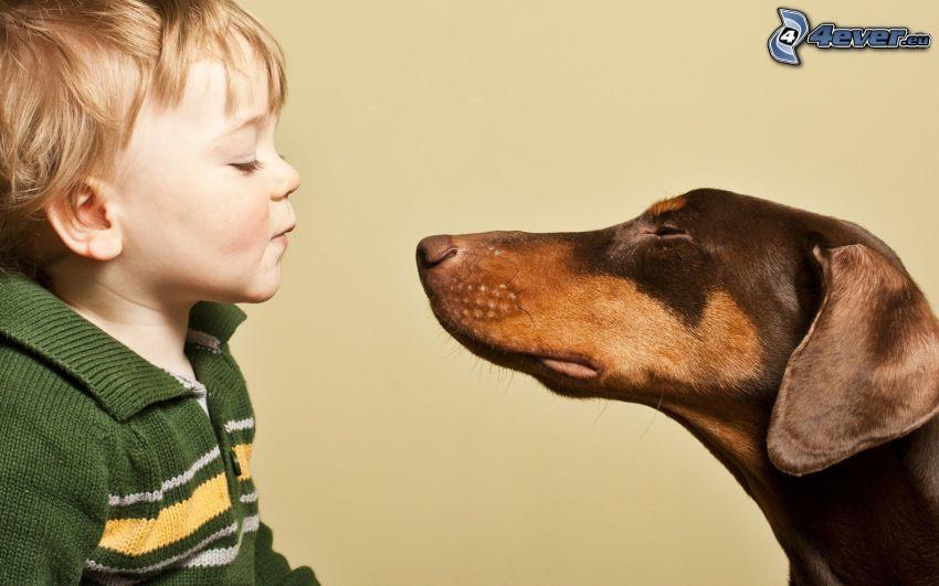 niño pequeño, doberman, beso