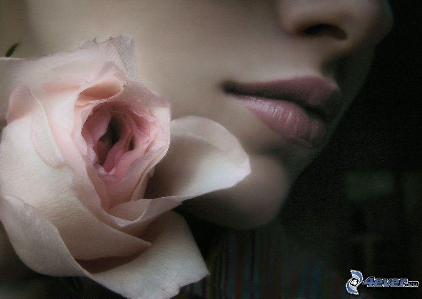 rosas de color rosa, cara, boca