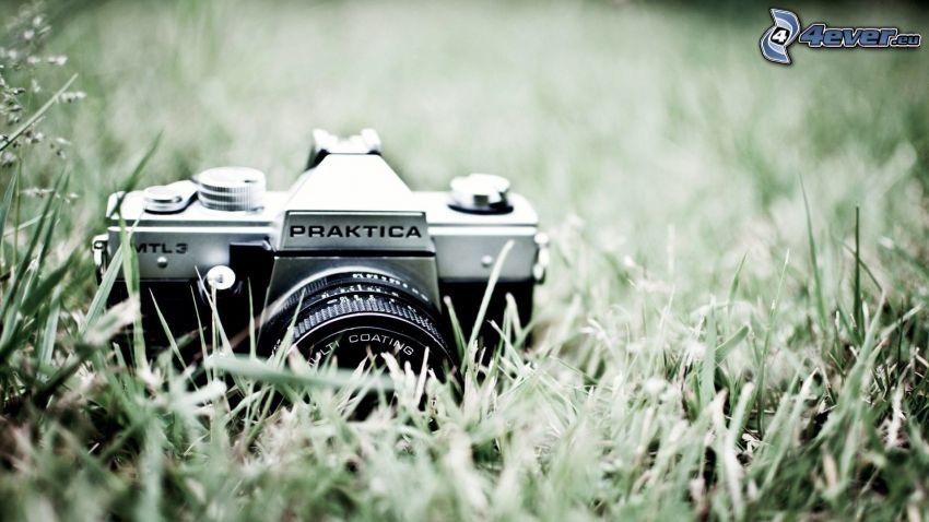 cámara, hierba