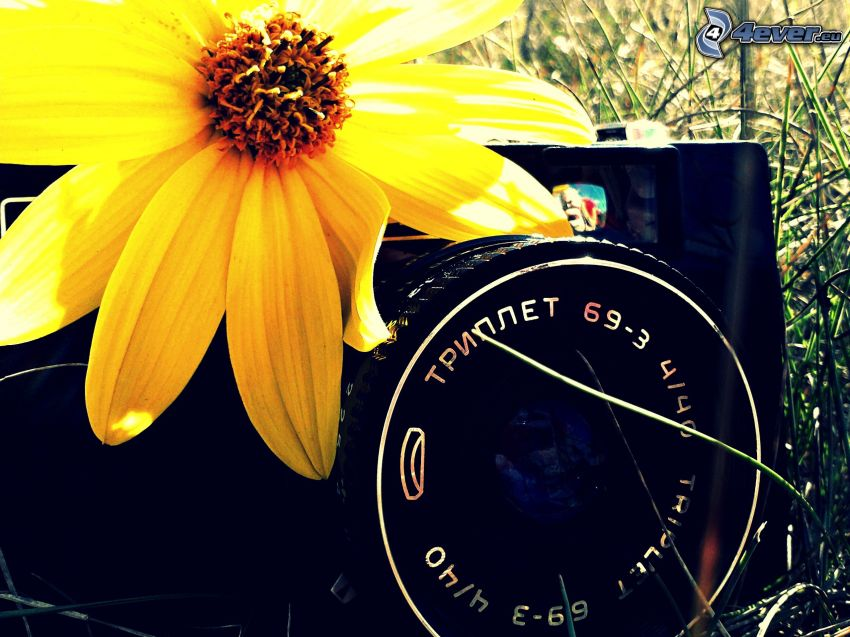 cámara, objetivo, flor
