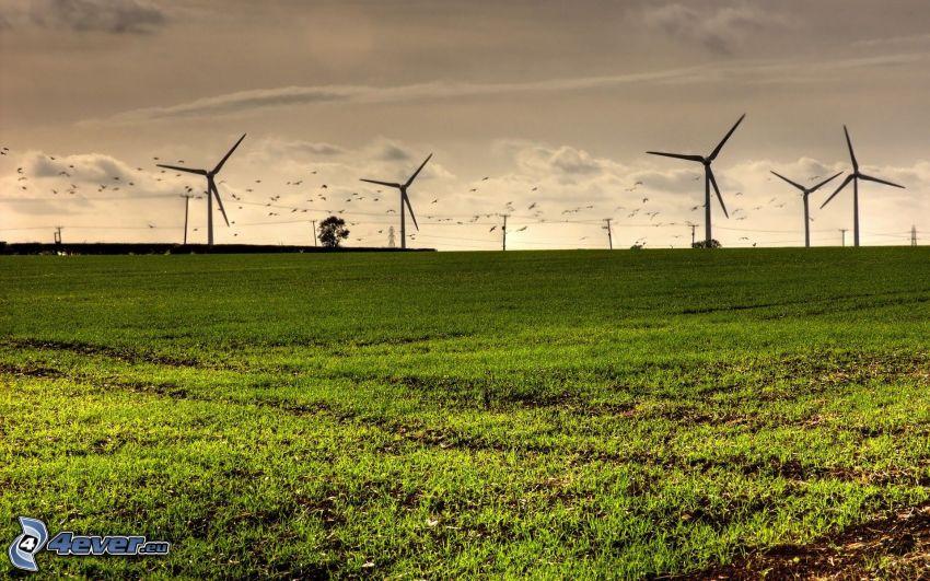 energía eólica, campo