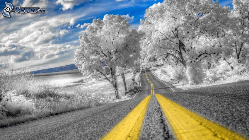 camino, árboles nevados, nubes, HDR