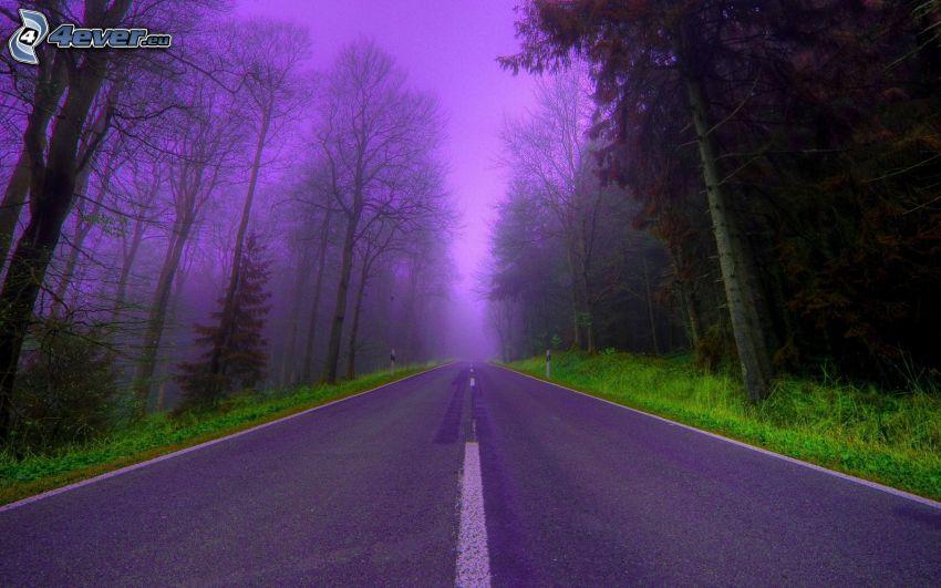 camino por el bosque, cielo púrpura
