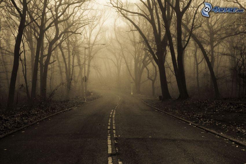 camino por el bosque, niebla, sepia