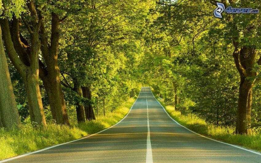 camino recto, camino por el bosque, árboles