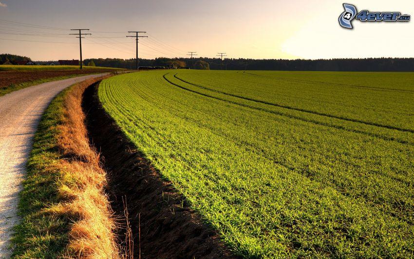 campo, camino, alambrado