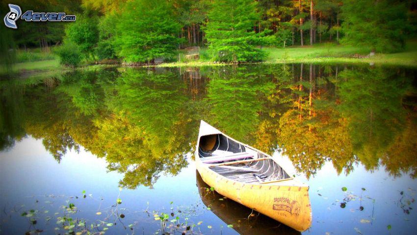 canoa, lago, reflejo, árboles