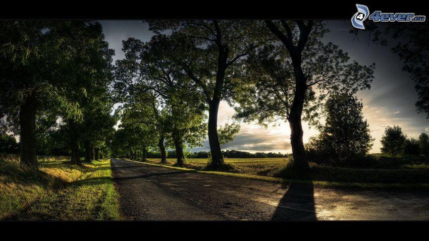 carretera nocturna, arboleda, puesta del sol, árbol de sombra