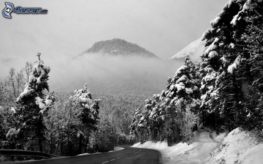 paisaje nevado, árboles nevados, camino