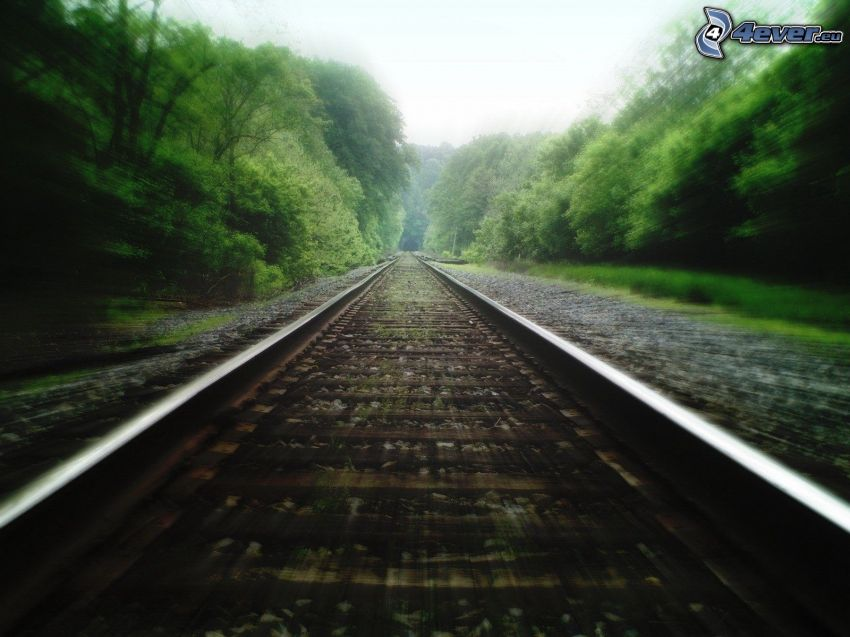 carril, ferrocarril, árboles