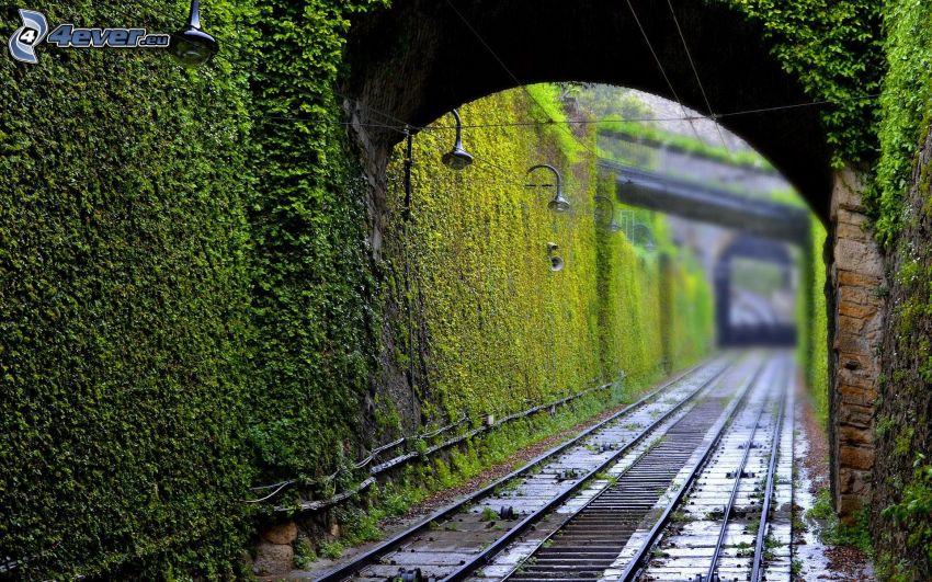 ferrocarril, pared, hojas verdes