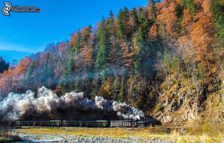 tren de vapor, bosque de otoño