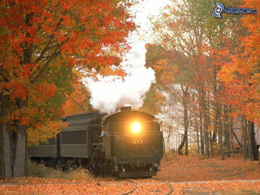 tren de vapor, otoño