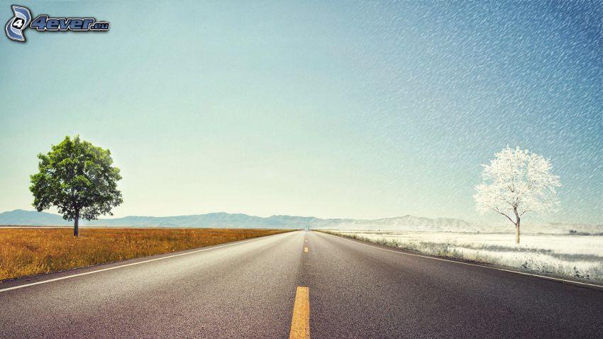 verano, invierno, camino recto, nieve