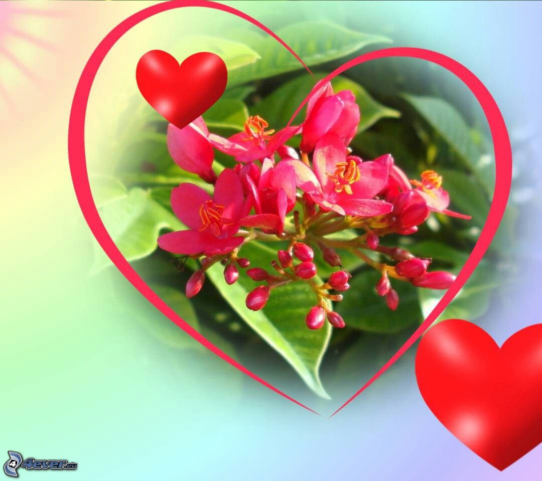 corazones con rosas