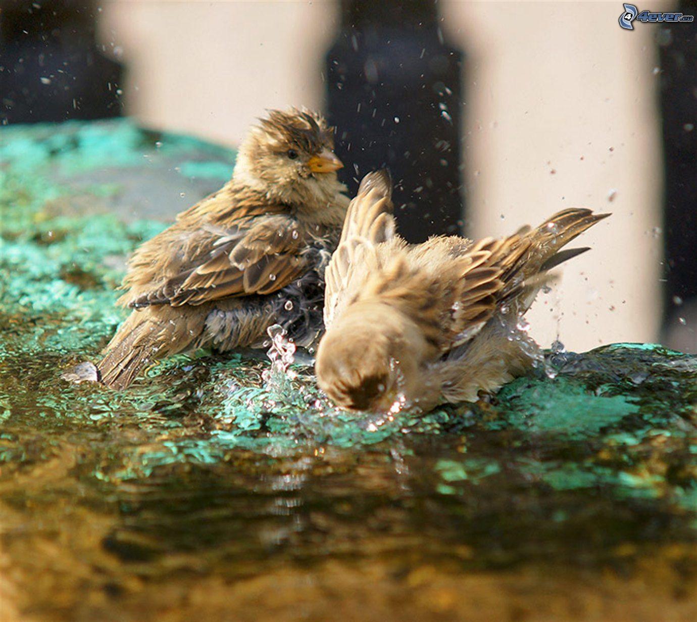 El parque Aves,-agua,-bano-225287