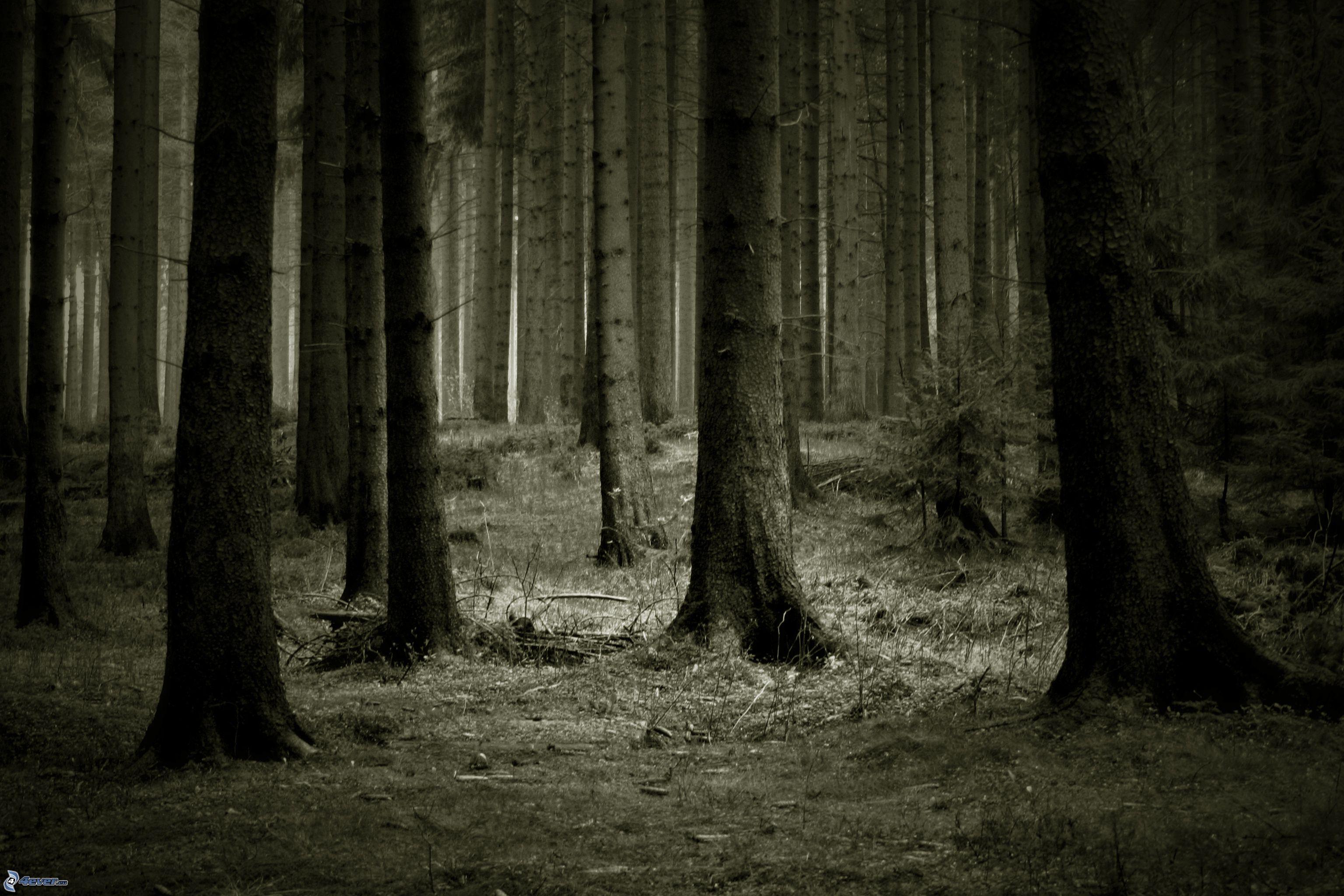 Bosque Oscuro
