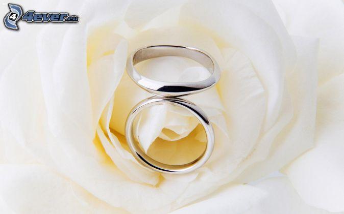 anneaux de mariage , roses blanches