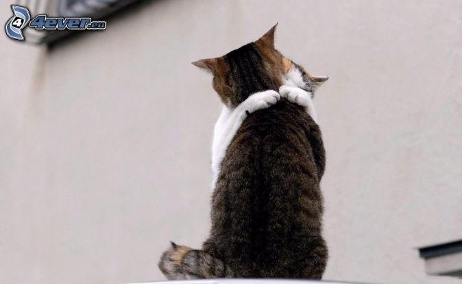 chats, étreinte