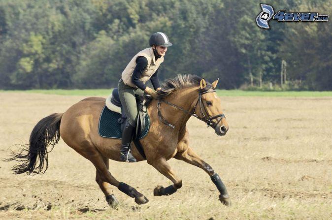 running horse 3d wallpaper