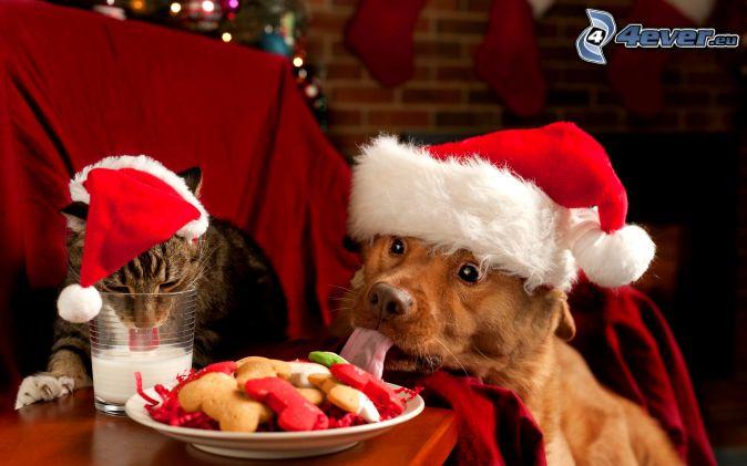 chien et chat, chapeau de Noel, lait, aliment
