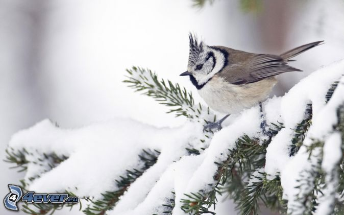 Bon Mardi Oiseau,-arbre-gele,-givre,-neige-155668