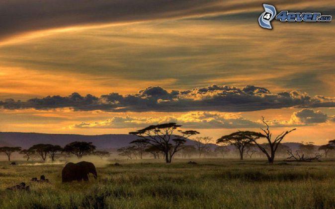 Safari, éléphant, après le coucher du soleil