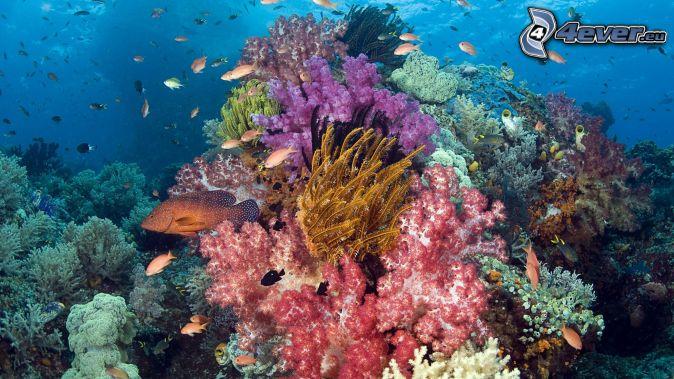 Les crèmes solaires toxiques pour les coraux Fond-marin,-coraux,-poissons-de-corail-164530