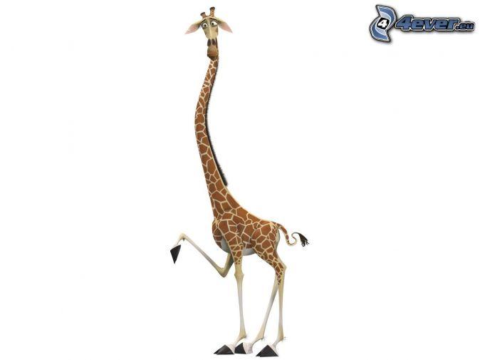 Girafe de madagascar - Girafe dans madagascar ...