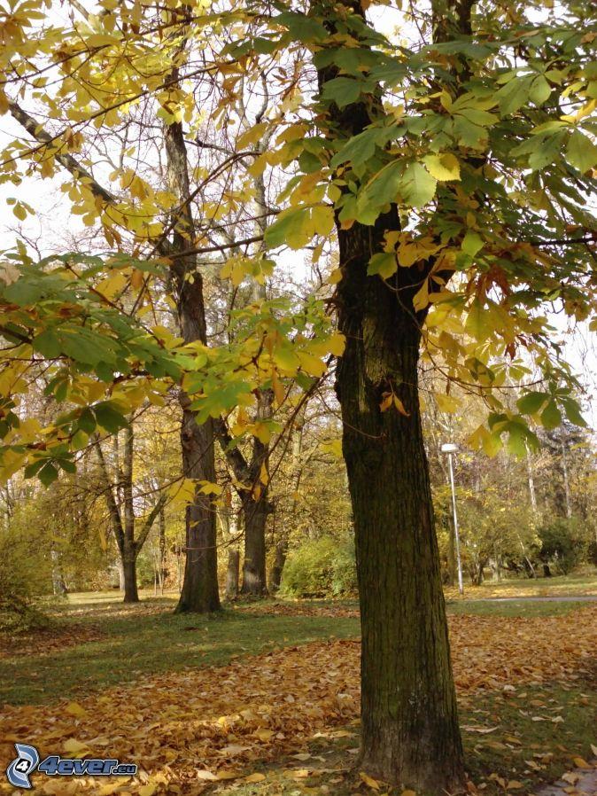 Arbre feuilles caduques - Arbres a feuilles caduques ...