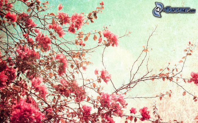 arbre à floraison, fleurs roses